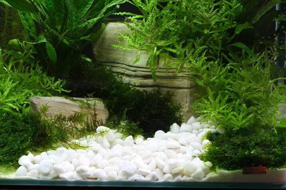 Gravier dennerle plantahunter glacier sable et gravier - Gravier pour aquarium ...