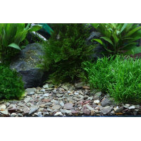 Dennerle Gravier Plantahunter Rio Xingu Mix 2-22mm