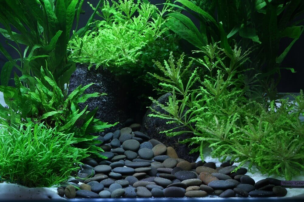 Gravier dennerle plantahunter yukon sable et gravier for Gravier aquarium