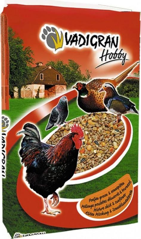 HOBBY Mélange poulette avec tournesol