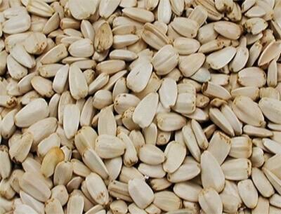 Grandes graines de tournesol blanches pour oiseaux