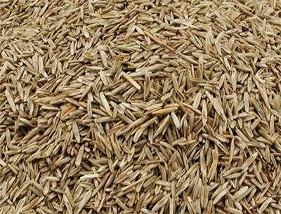Semences d'herbes pour oiseaux exotiques et tarins