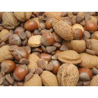 Mélange de noix pour grandes perruches et perroquets