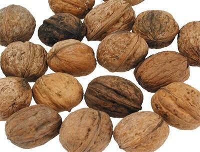 Nüsse für große Sittiche und Papageien