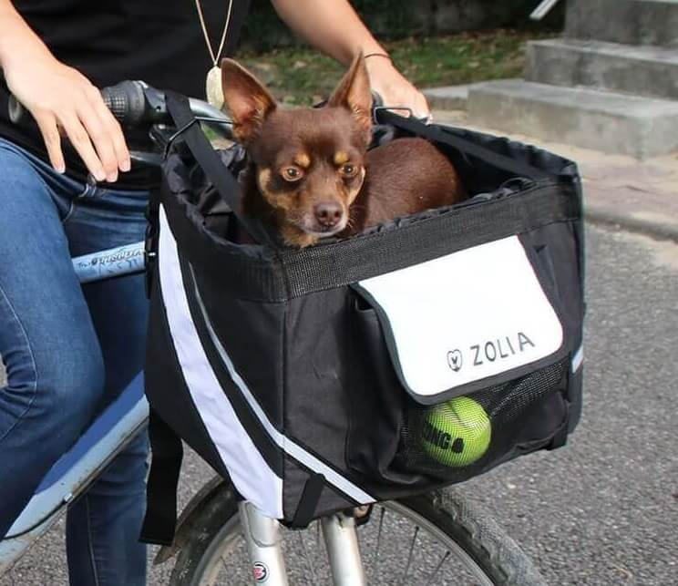 Panier vélo ZOLIA pour chien