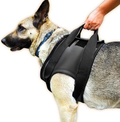 JULIUS K9 Harnais pour chien de soutien à la marche, épaules
