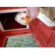 35529_Petit-pain-à-la-carotte-pour-rongeurs-_de_Aurelie_23088141560521fd95c68c5.02452779