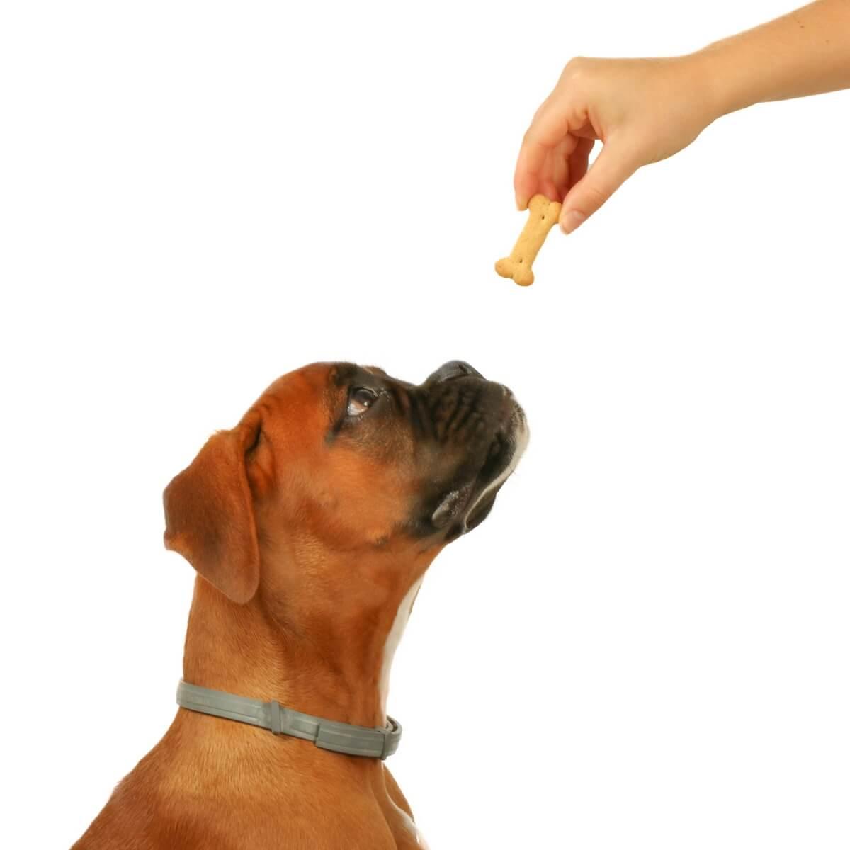 Biscuits assortis DAILYS pour chien 1kg_2