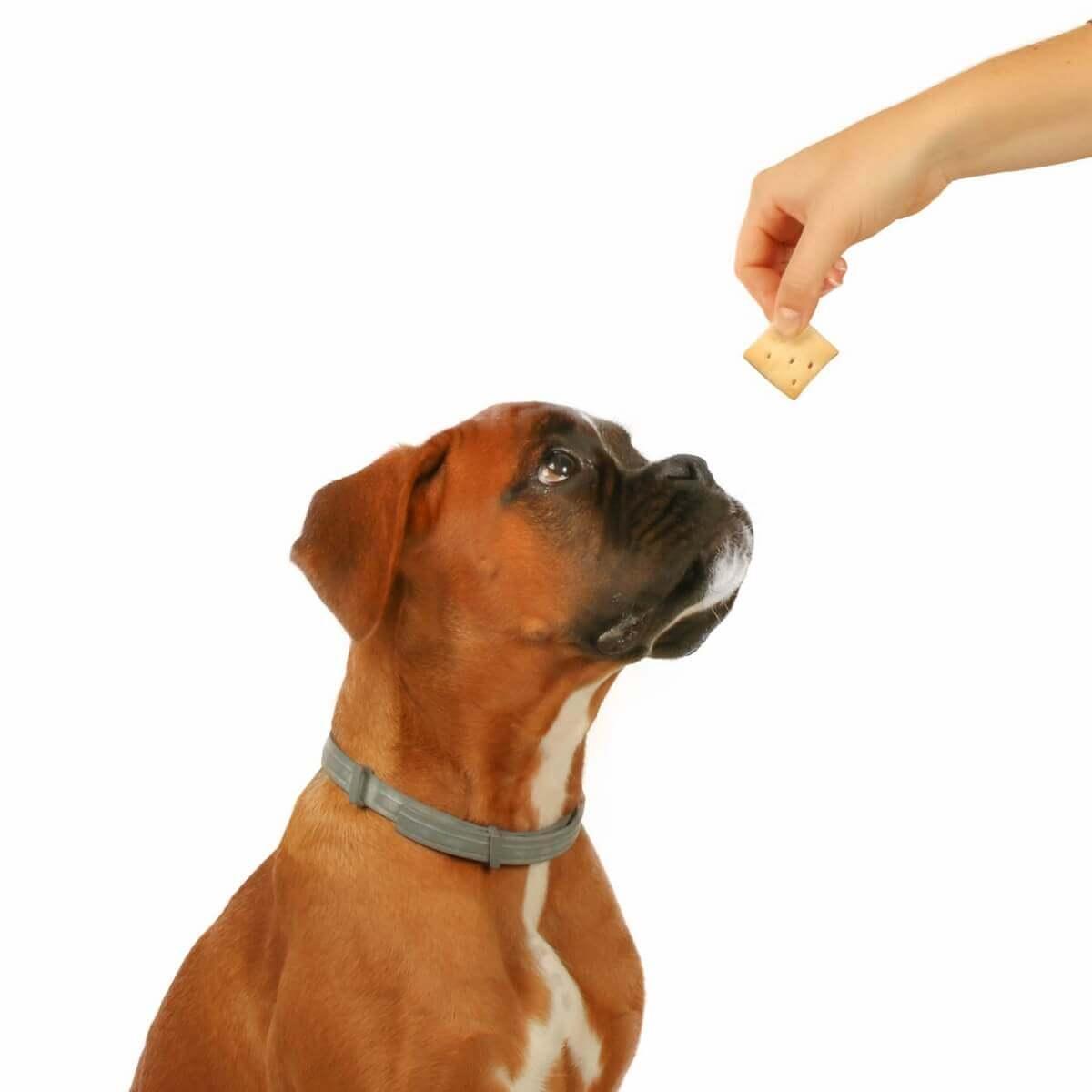 Biscuits assortis DAILYS pour chien 1kg_3