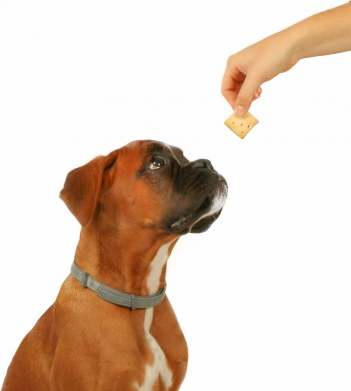Biscuits Gourmandises Assorties pour Chien DAILYS