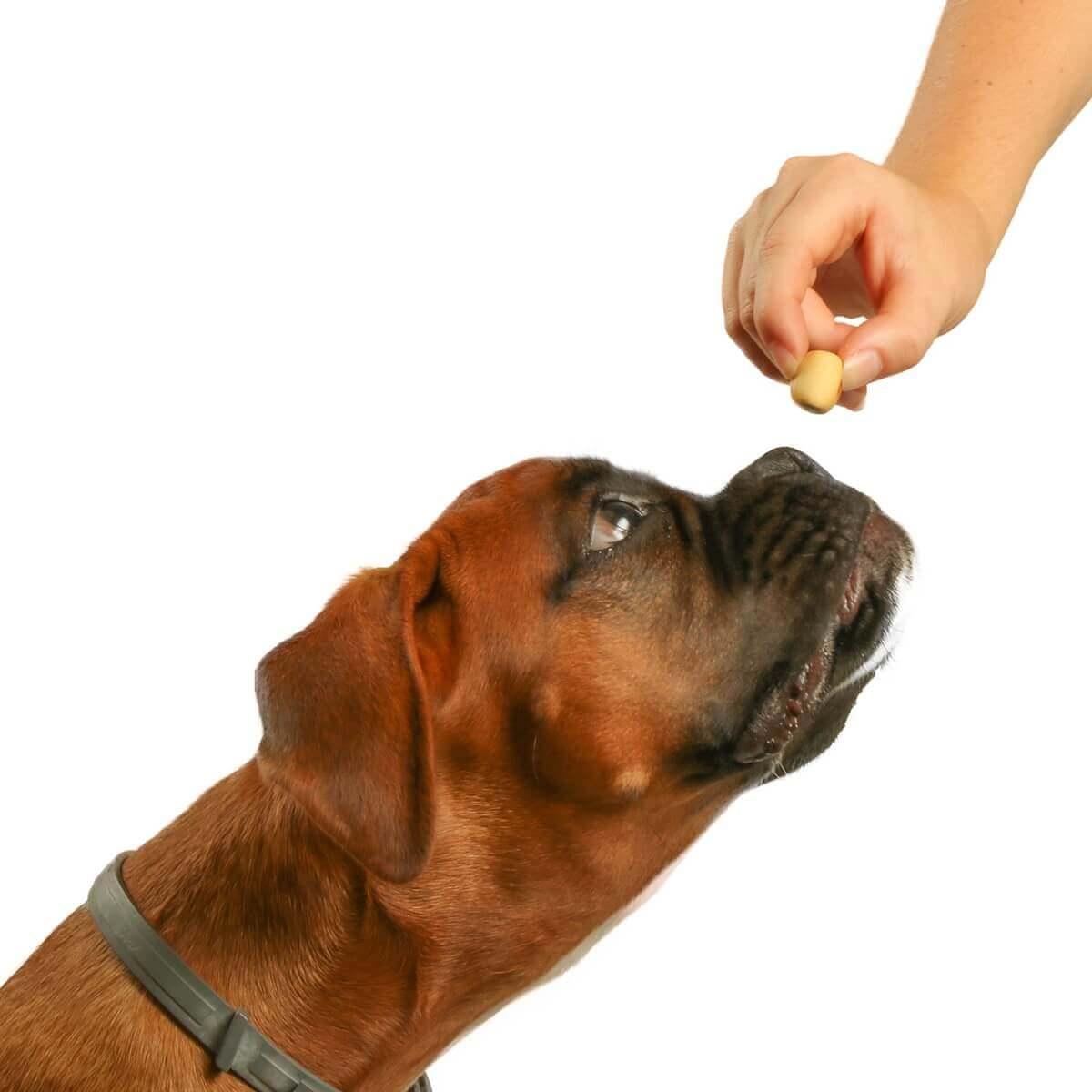 Biscuits minis fourrés DAILYS pour chien_4