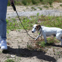 Laisse enrouleur rétractable Zolia PIXYDOG pour chien