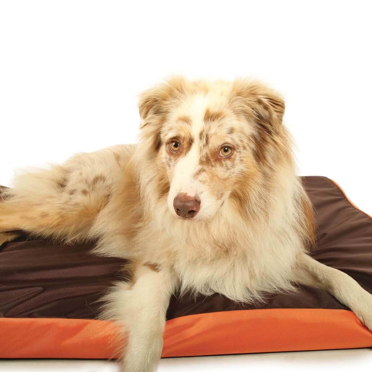matelas relax dog bicolore imperm able 100cm pour chien coussin et tapis. Black Bedroom Furniture Sets. Home Design Ideas