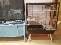 36166_Jaula-NEO-Cosy-negra-para-conejos-y-grandes-roedores_de_Arturo_17664671565dc2aae5536e85.60891892