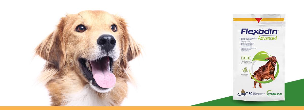 banner flexadin bouchées pour chiens arthrose zoomalia