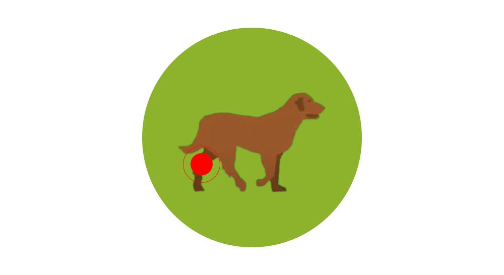 flexadin bouchées chiens contre l'arthose zoomalia
