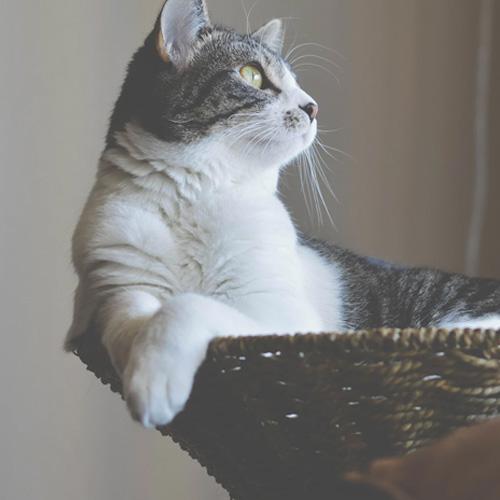 avis celine flexadin plus chats et chiens