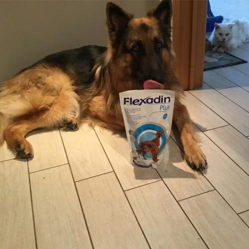avis patricia vetoquinol flexadin plus chiens de plus de 10 kg