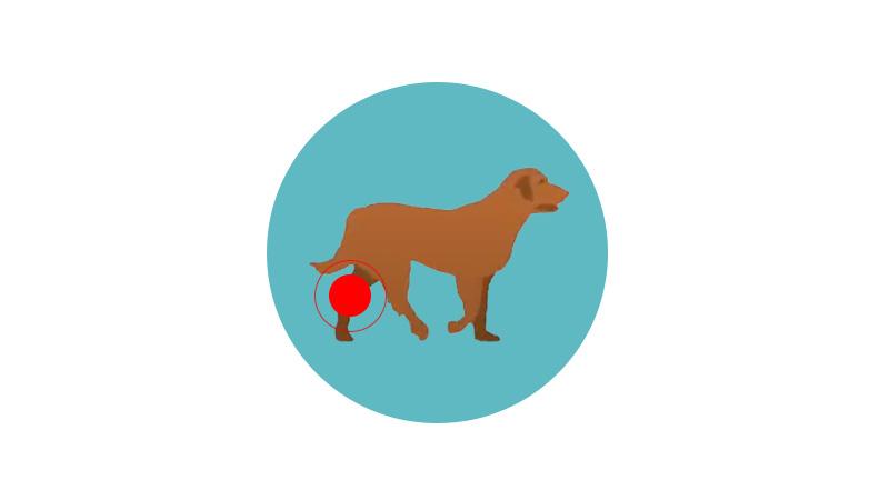 flexadin plus chien de 10kg arthrose