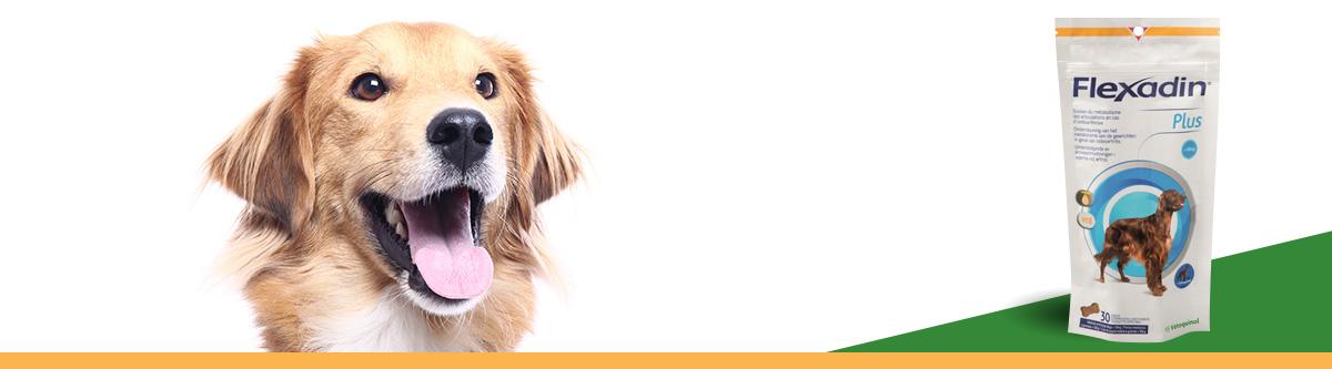 flexadin chiens de plus de 10kg