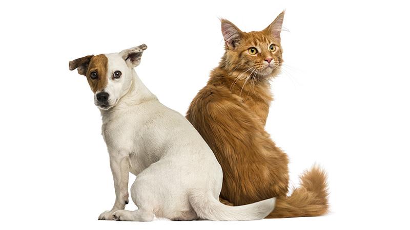 proxym plaque off chien et chat