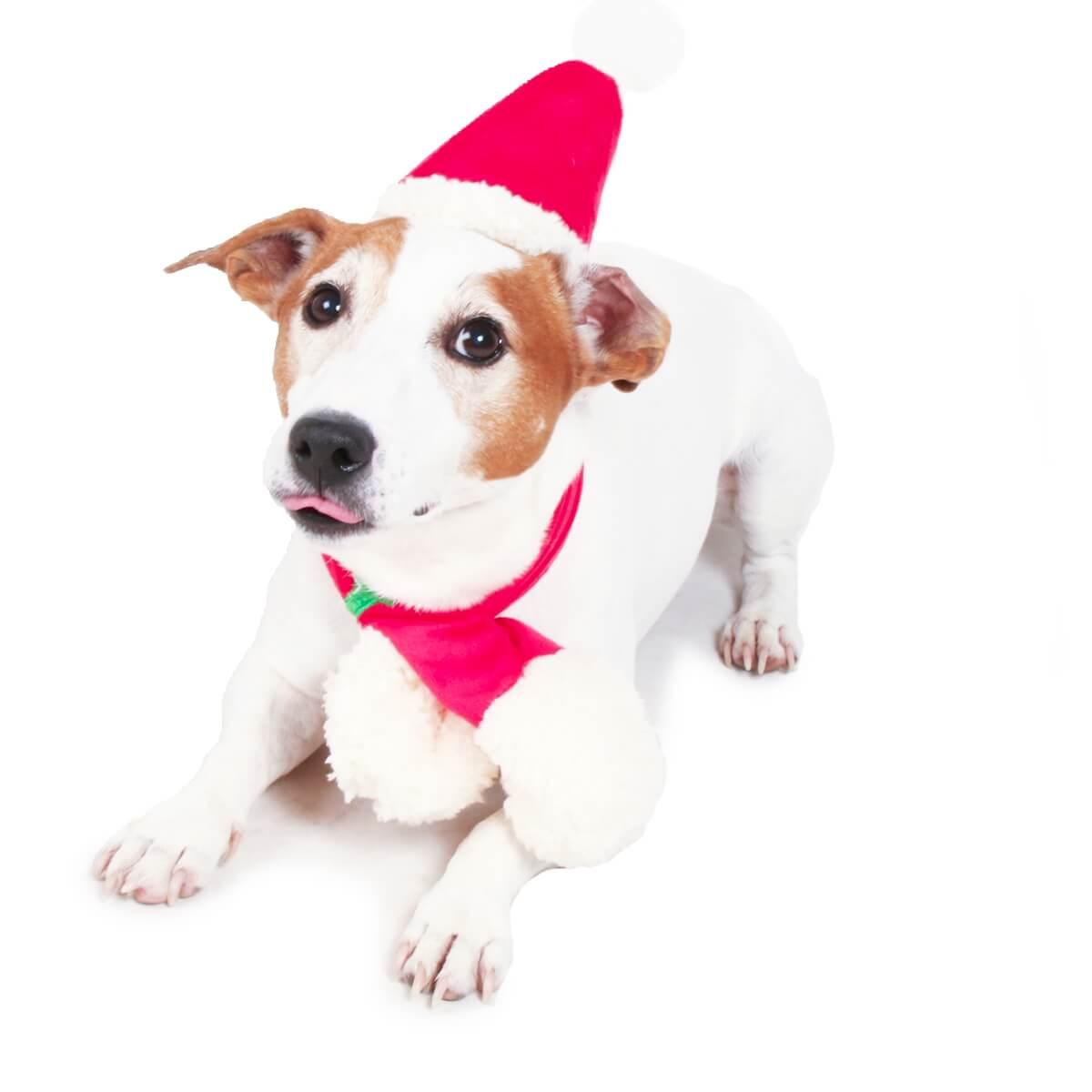 set bonnet et echarpe de no l pour petit chien d guisement pour chien. Black Bedroom Furniture Sets. Home Design Ideas