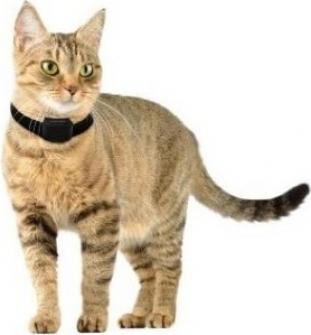 Système anti-fugue CANIFUGUE SMALL pour chat et petit chien