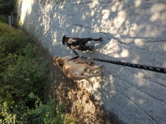 Accouple-Footing-Softline-Duo-Zolia-pour-chien_de_Sidna_5211391865cdbf161523955.40114126