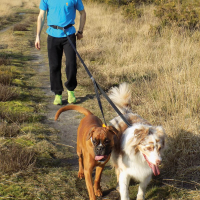 Accouple Footing Softline Duo Zolia pour chien (1)