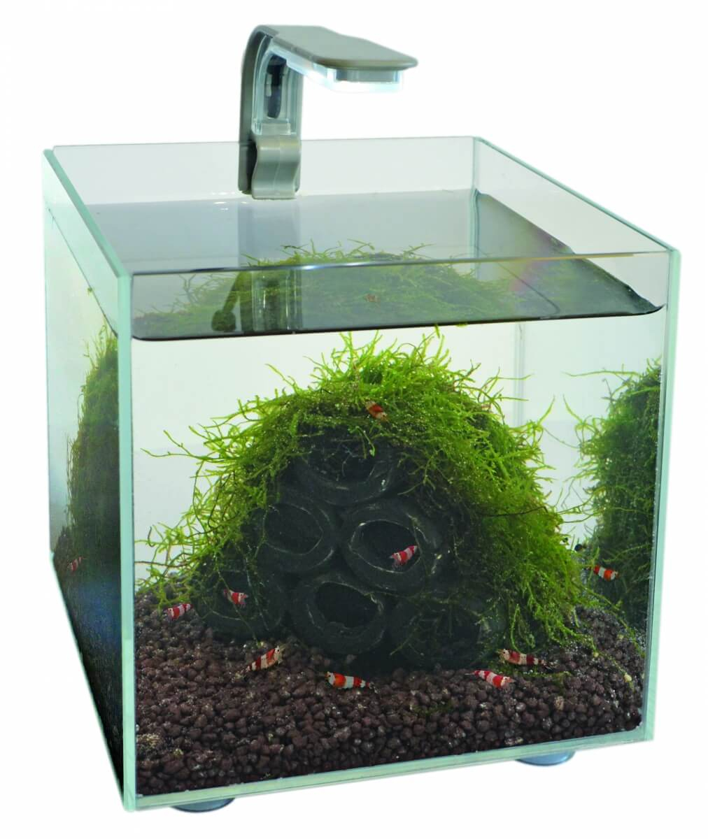 Mini Aquarium SuperFish Shrimp Kit 1.8L_0