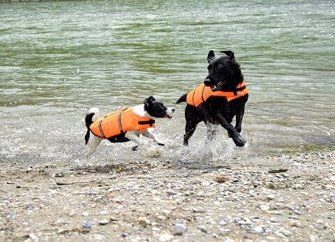 Gilet flottant pour chien
