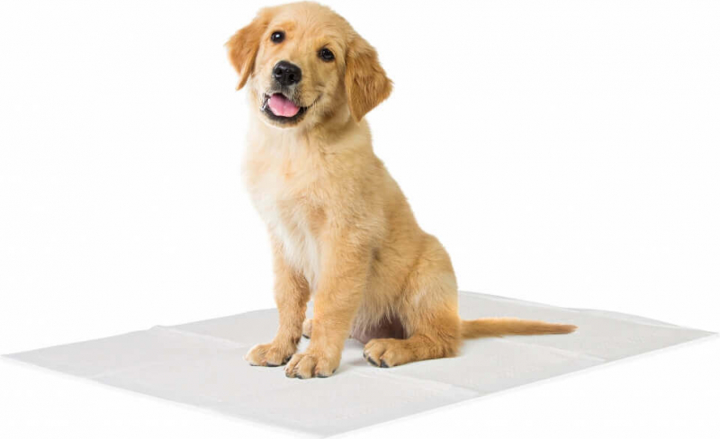 Tapis éducateur Basic Training Pads pour chien