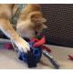 37875_Balle-pour-chien-Hol-ee-Roller---5-tailles-disponibles-_de_Magali_3877577776024f449845225.36119600
