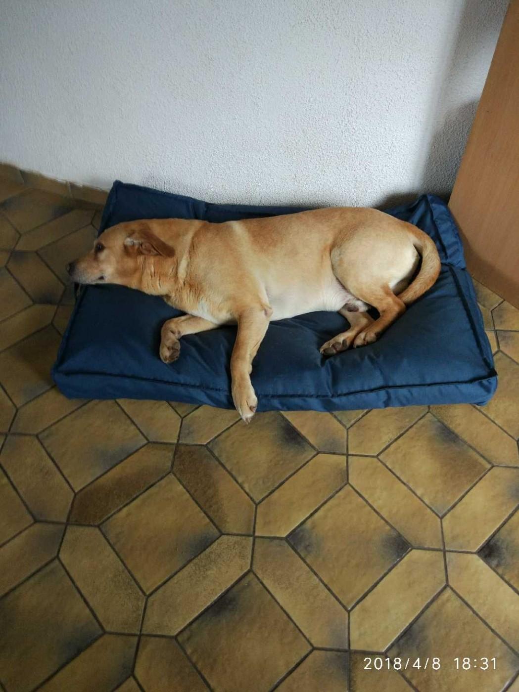 Grand Coussin Pour Exterieur avis sur coussin d'extérieur xxl pour chien zolia flopy bleu