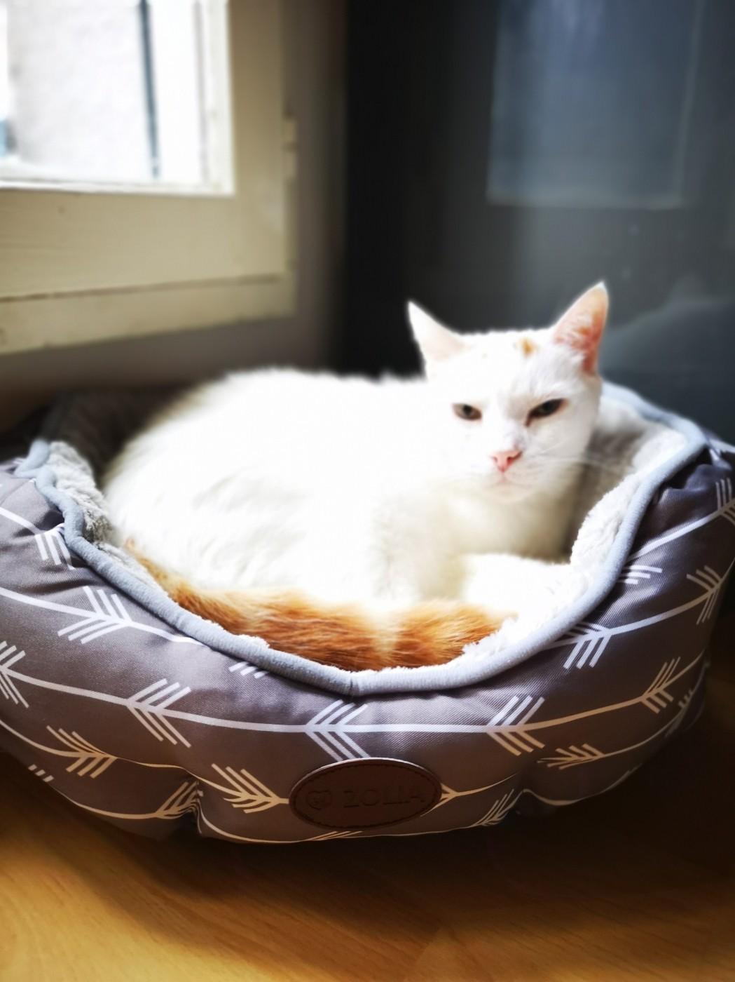 panier zolia tatoo cosy extra doux pour petit chien ou chat. Black Bedroom Furniture Sets. Home Design Ideas