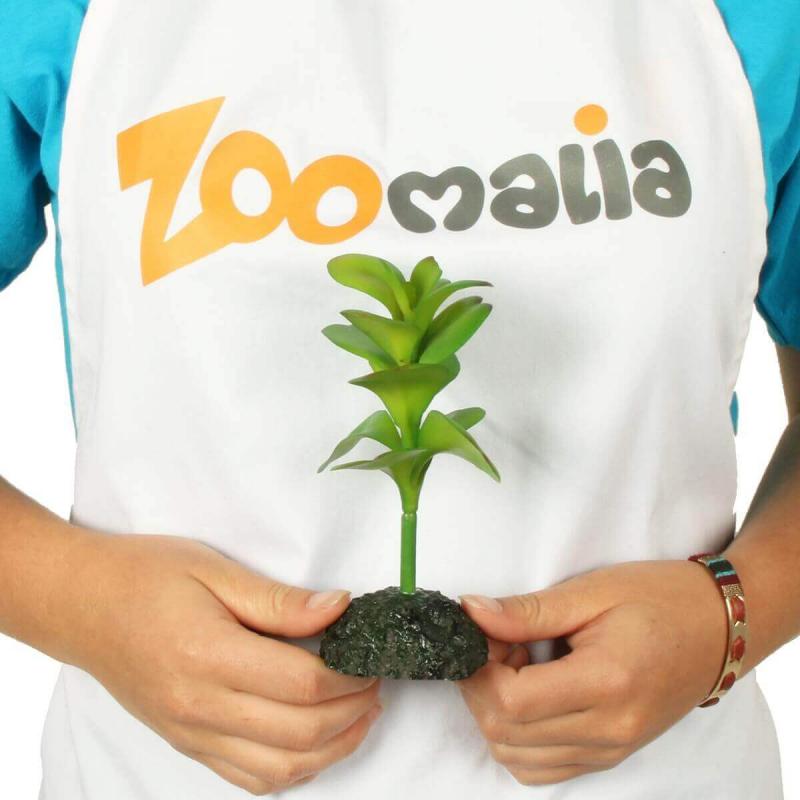 Plante pour terrarium Exotica REPTIL'US