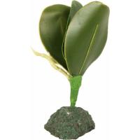Planta para terrarium Tropica REPTIL'US