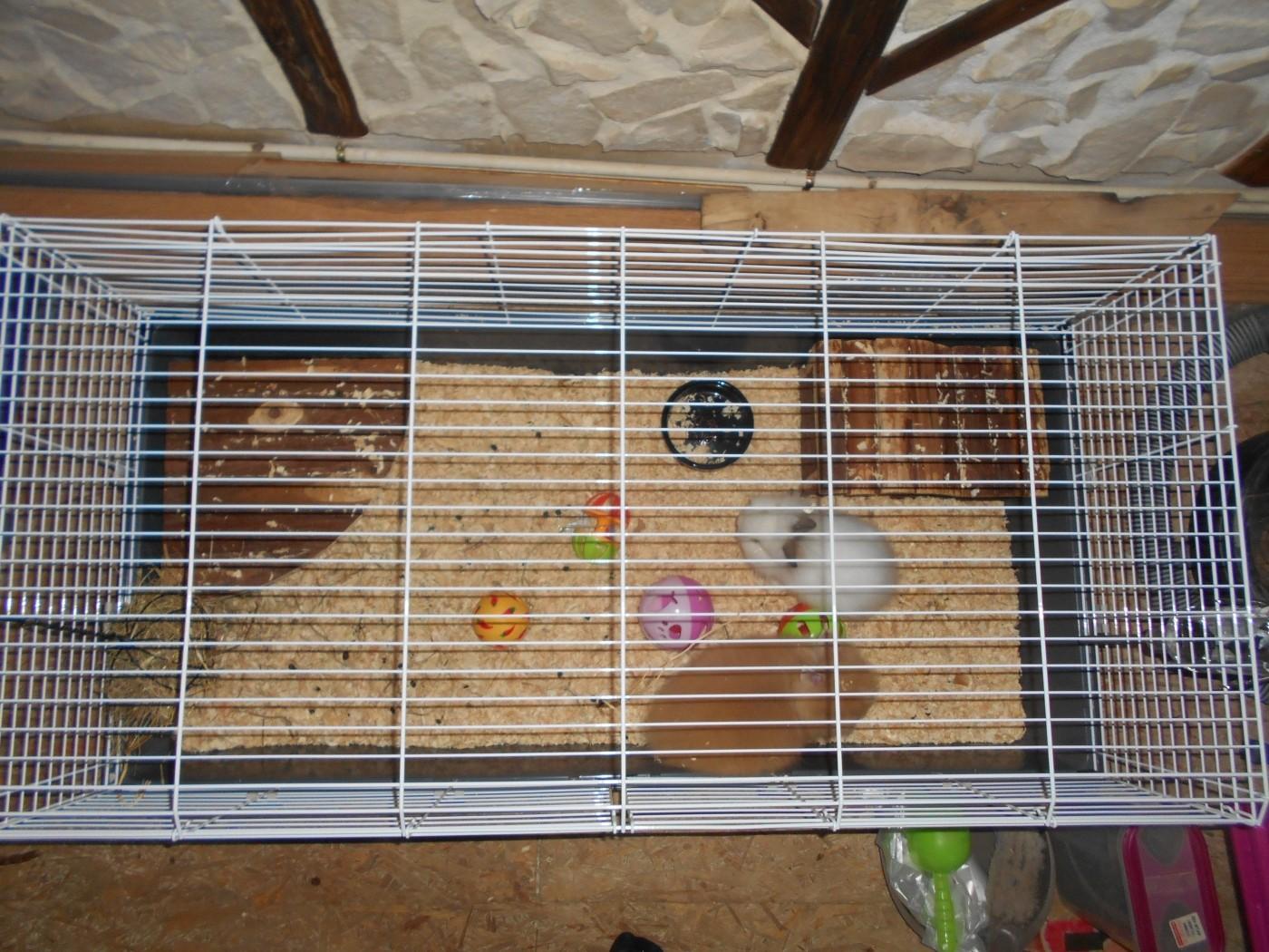 cage zolia onyx 120cm pour lapin et cochon d 39 inde. Black Bedroom Furniture Sets. Home Design Ideas