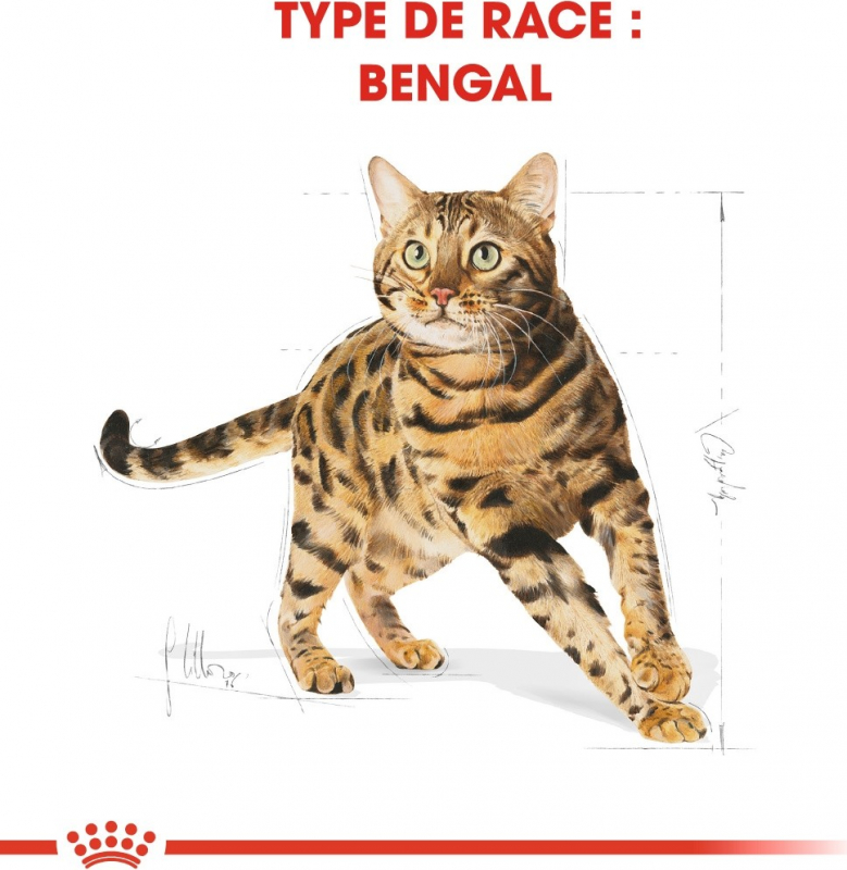 Royal Canin Breed Bengal