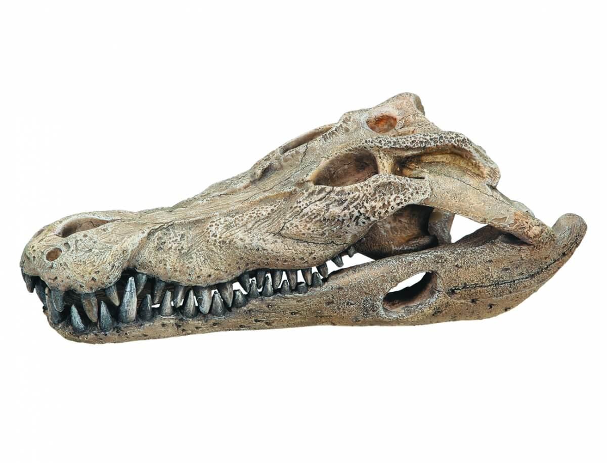 Décoration d'aquarium Crâne de crocodile_0