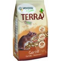 Rato-do-deserto (gerbil)