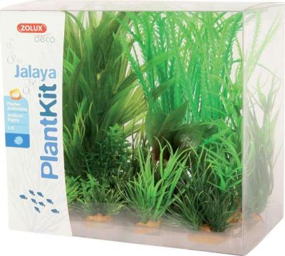 Plantkit Jalaya assortiments 6 plantes