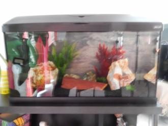 38808_Kit-aquarium-FIRST-60cm-49L_de_Philippe_15599983065abf35b3ec5b46.48537451