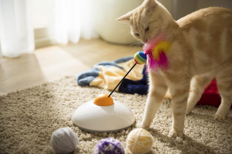 Jouet connecté Pawbo Catch pour chats