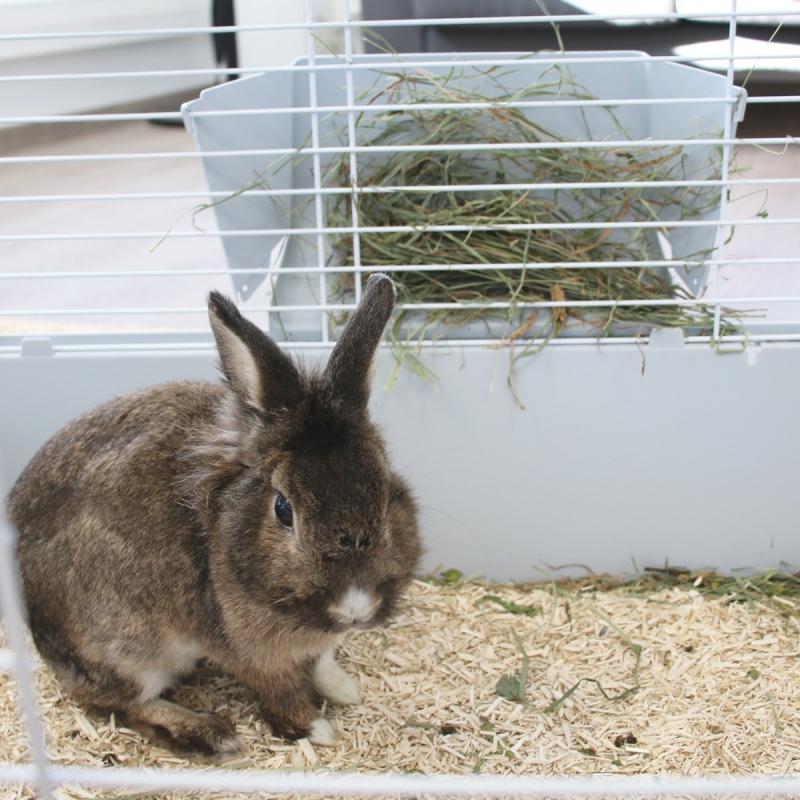 Cage ZOLIA Mamba 120cm pour lapin et cochon d'inde