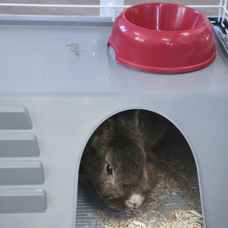 Kooi ZOLIA Mamba 120cm voor konijnen en cavia's