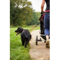 Laisse All In One de HALTI idéale pour le Cani Cross