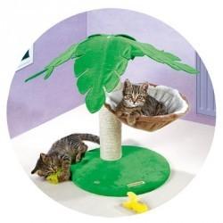 arbre a chat palmier