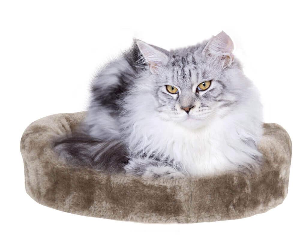 kratzbaum 4in1 f r kitten kratzb ume. Black Bedroom Furniture Sets. Home Design Ideas