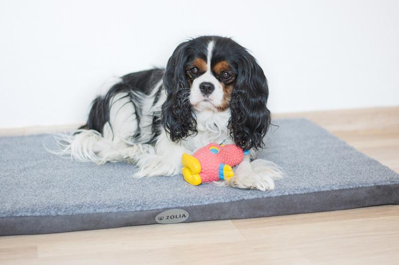 Matelas pour grand chien Zolia Naya Gris de 75 à 90cm